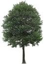 Tree,oak, Plants, Nature, Gree...