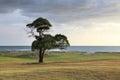Tree On The Ocean Coast