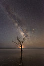 Tree in the ocean under the Milky Way Galaxy Royalty Free Stock Photo