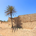 Tree and old fortress palm crusaders middle east caesarea israel Stock Photo