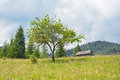 The tree and old house in mountains Royalty Free Stock Images