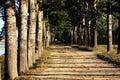Tree open road