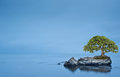 Tree on orck on isolated sea Stock Photo