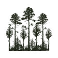 Tree outdoor travel black silhouette coniferous natural badge, tops pine spruce branch cedar and plant leaf abstract Royalty Free Stock Photo