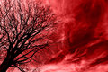 Tree Over Blood Royalty Free Stock Photos