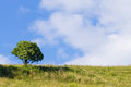 tree over blue sky. Summer panorama Royalty Free Stock Photo