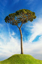 Tree over hill Stock Images