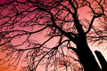 Tree over red sky Royalty Free Stock Photo