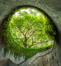 The tree over tunnel walkway at Fort Canning Park and Penang roa Royalty Free Stock Photo
