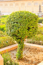 Tree palace and garden amber fort the fortress in india Royalty Free Stock Photo