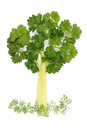 Tree of parsley and celery Royalty Free Stock Photo