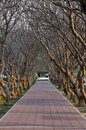 Tree path way tunnel decorated by three cver location thailand Stock Photography