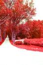 Tree pathway Royalty Free Stock Photo