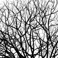 Tree pattern Royalty Free Stock Photography