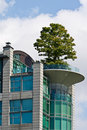 Tree on a Penthouse Stock Photography