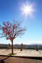 Tree photo of red fall and sun Royalty Free Stock Photography