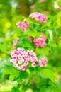 Tree Pink Flowers