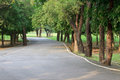 Tree plant and asphalt way in public park Stock Photography