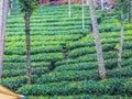 Tree plantation at Cochin