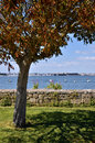 Tree in the port of port louis of brittany in france with red leaves with town lorient background commune morbihan department Stock Photo