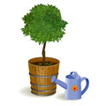 Tree in a pot and watering vector illustration Royalty Free Stock Photography