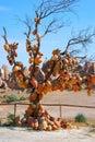Tree with pottery Royalty Free Stock Photo