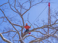 Tree pruning cutting lumberjack winter months Stock Photography