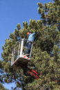 Tree Pruning By A Man With A C...