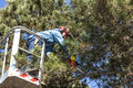 Tree pruning by a man with a chainsaw, standing on a mechanical platform, on high altitude between the branches of austrian pines.