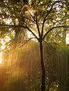 Tree in Rain Royalty Free Stock Photography