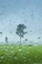 Tree in rainy scene in rice field Royalty Free Stock Photo