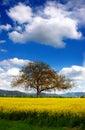 Tree and Royalty Free Stock Photo