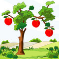 Tree with red apples Royalty Free Stock Image