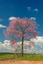 Tree with red flowers and clouds Royalty Free Stock Photo