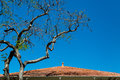 Tree by Red Tile Roof Royalty Free Stock Photo