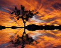 A tree reflected in lake on the with gloomy sky Stock Photos
