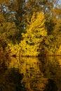 Tree reflecting in water autumn scenics fall Stock Photo