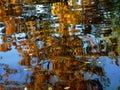 TREE REFLECTION Royalty Free Stock Photo