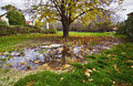 Tree reflection on the rain pond Royalty Free Stock Photo