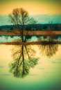 Tree reflection in water Royalty Free Stock Photo