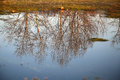 Tree reflection on water surface Royalty Free Stock Photo