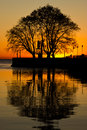 Tree reflections sunrise sunset pier Royalty Free Stock Image
