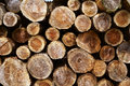 Tree ring of felling wood Royalty Free Stock Photo