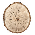Tree rings Stock Image