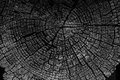 Tree rings old weathered wood texture with the cross section of Royalty Free Stock Photo