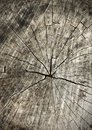 Tree rings old wood texture as background, cross section Royalty Free Stock Photo