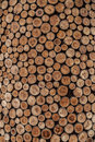 Tree Rings Royalty Free Stock Photo