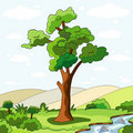 Tree and rivulet Royalty Free Stock Photography