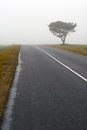 Tree and road in fog autumn Royalty Free Stock Photo