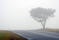 Tree and road in fog with silhouettes autumn Royalty Free Stock Images